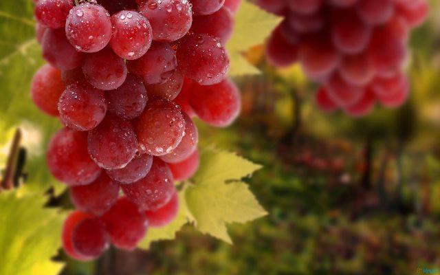 العنب الأحمر